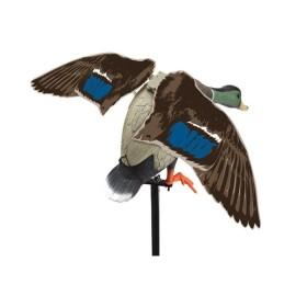 Germano maschio ali battenti - LUCKY DUCK