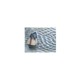 Germano maschio testa sott'acqua - LUCKY DUCK