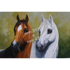 Stampa Cavalli da quadro di R. Bianchi - UDB