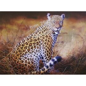 Stampa Leopardo da quadro di R. Bianchi - UDB